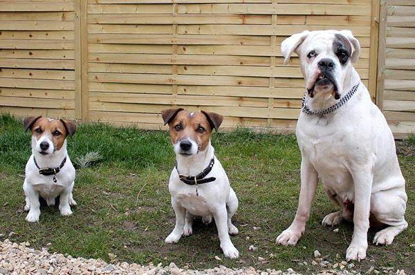 Školka pro psy VIP Pets