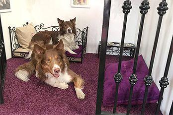 Pokoj v hotelu pro psy