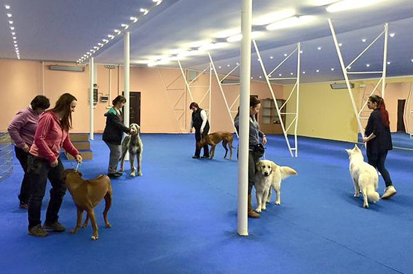Multicentrum DOG Academy