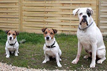 Psi ve školce pro psy
