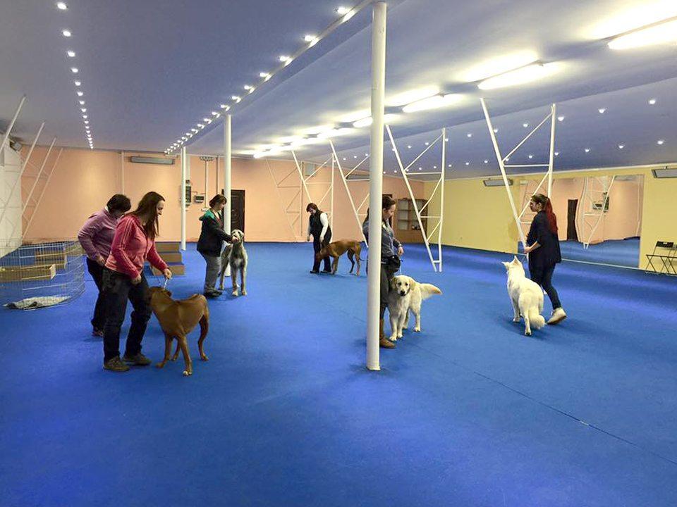 Kynologická hala VIP-Pets_handling, příprava na výstavy