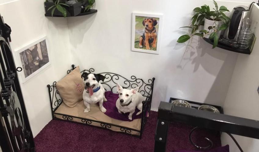 VIP PETS na výstavě FOR PETS (11)