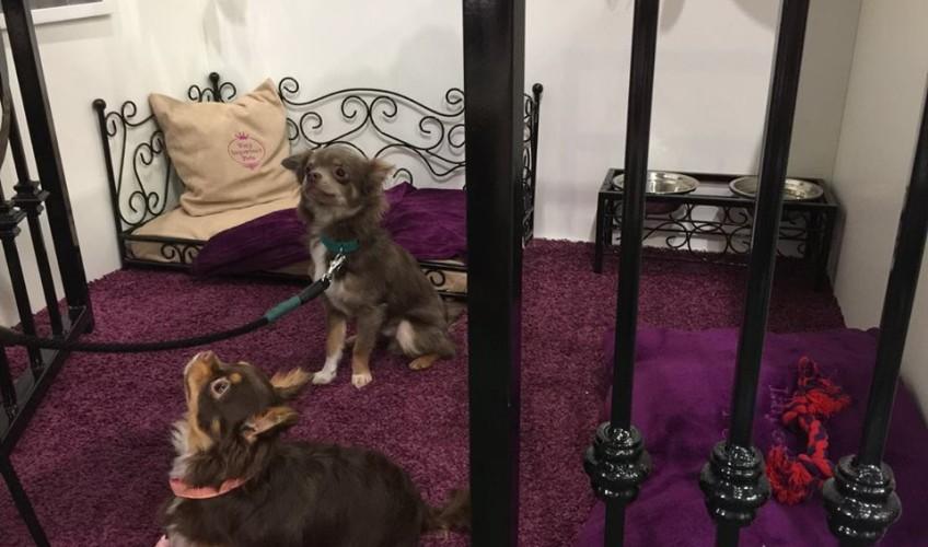 VIP PETS na výstavě FOR PETS (15)