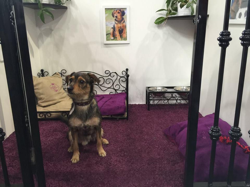 VIP PETS na výstavě FOR PETS (16)