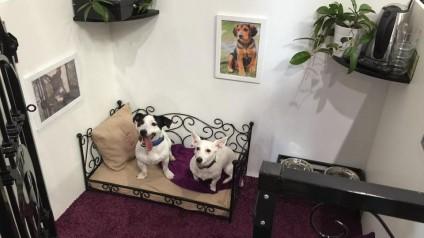 VIP PETS na výstavě FOR PETS (3)