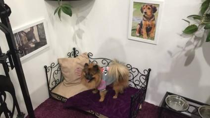 VIP PETS na výstavě FOR PETS (4)