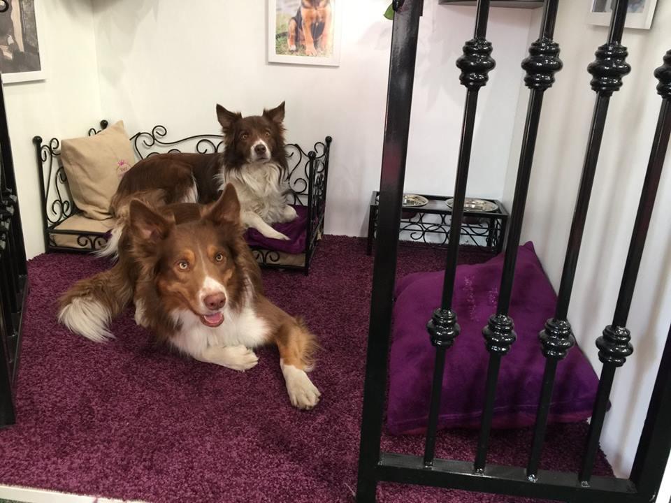 VIP PETS na výstavě FOR PETS (6)