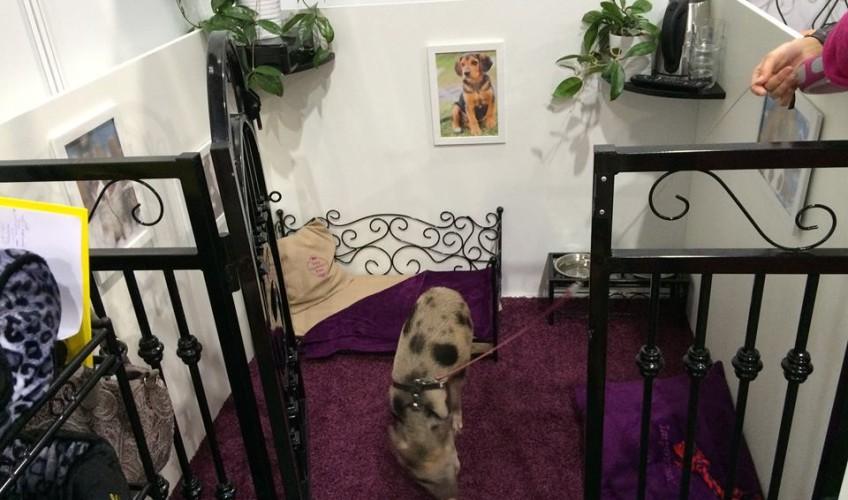 VIP PETS na výstavě FOR PETS (7)