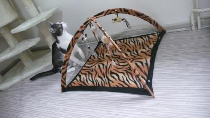 Hotel pro kočky VIP CATS