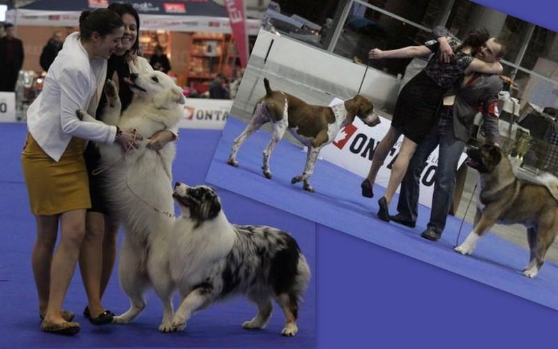 Výstavy psů – výstavní třídy, lektorka Linda Hodová